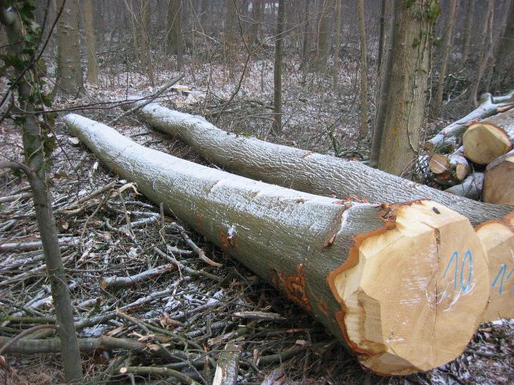 Services de Goris Bosbeheer  Vente de bois ~ Vente De Bois De Construction